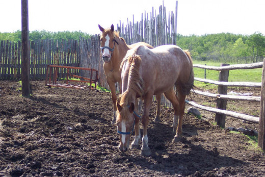 corral for horses