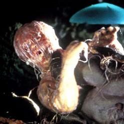 John's Horror Banana-nanza Episode Seventy-Three : Invasion of the Body Snatchers (1978)