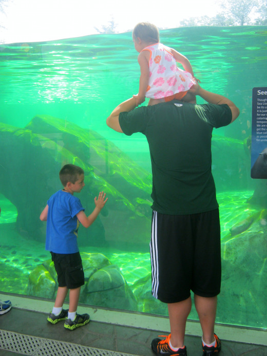 Families enjoying the water animal tanks