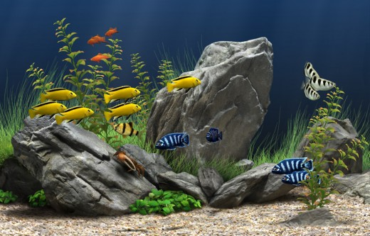 A Beautiful Freshwater Aquarium