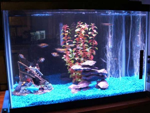 Another great freshwater Aquarium