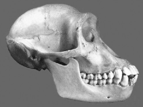 Prognathous Face : projected jaw