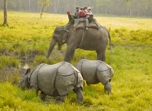 Jungle Safari in Chitwan National Park, Nepal.