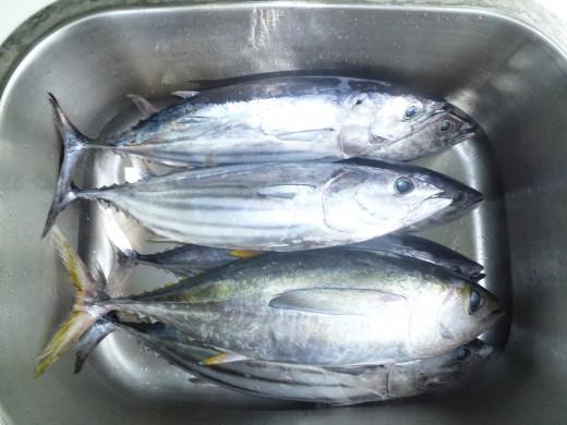Aku and Ahi (Bonito and Yellow Fin Tuna)
