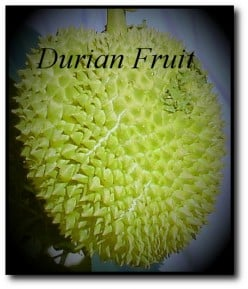 Durian the Smelliest Fruit in the World