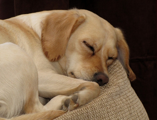 Dogs never have trouble falling asleep!