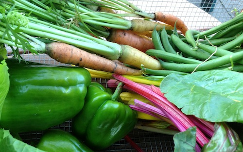 As carrots are harvested, succession plant with squash or peppers, then more carrots.