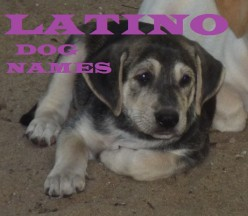Best Latino Dog Names