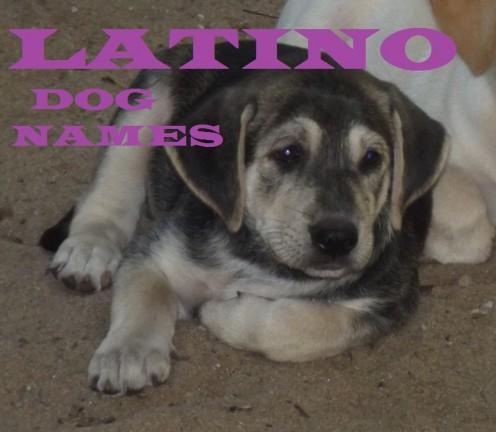 Best Latino Dog Names