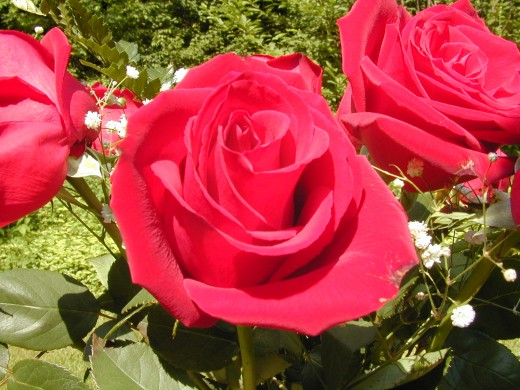 Show your love with flowers such as roses. Flowers such as roses are a good gift of love for special occasions such as birthdays, anniversaries, accomplishments and Valentine's Day