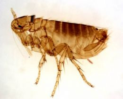 The best way to get rid of fleas is by prevention. If you never get them you won't have to get rid of them.
