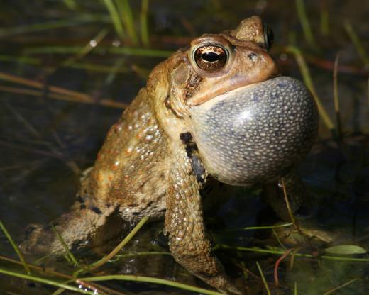 Frogs = Warts? NOO