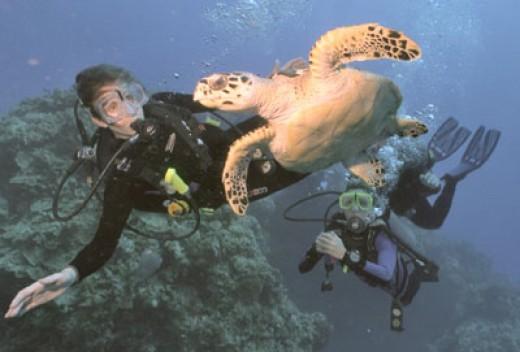 Mayan Rivera scuba diving.