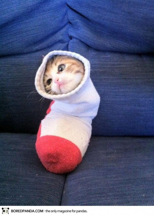 Cute and Funny Cat in a Sock