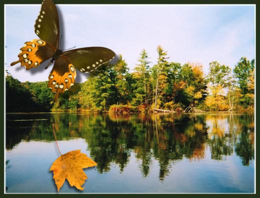 Fall Water Scene