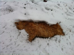 'Dead cat in the snow' from Brittany Loubier flickr.com