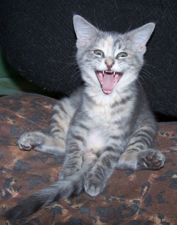 Funny Cat Stories and Funny Cat Pictures