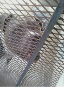 Is this dog a desperate, deranged killer by nature or is it another victim of bad human behavior?