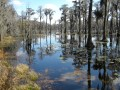The Wild Okefenokee : A True Murder Tale Of The Great Georgia Swamp