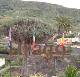The Drago Milenario in Parque del Drago