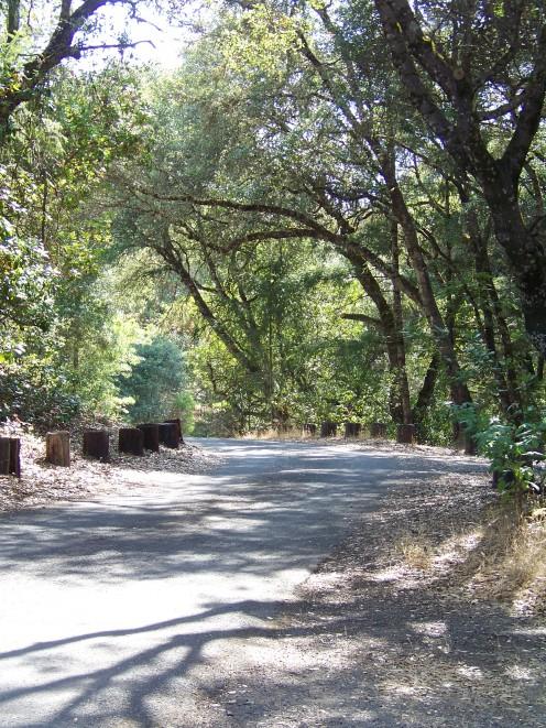 A road through Kyen Campground.