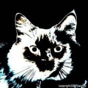 paizley profile image