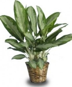 Five Best Houseplants for Low-Light Areas