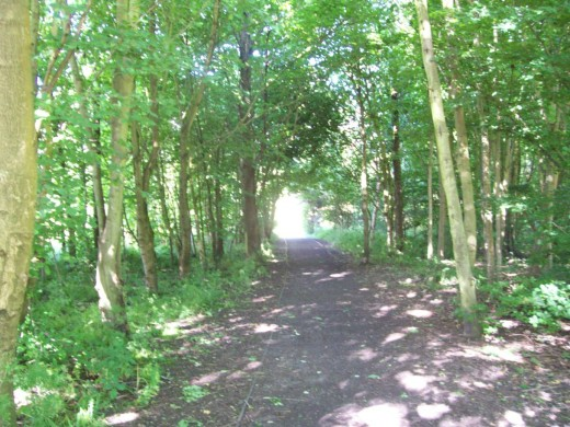 One of the wooded lanes leading into Lochore Meadows.