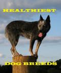 Six Healthiest Dog Breeds