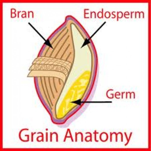The whole grain contains the whole kernel, the bran, the germ and the endosperm.