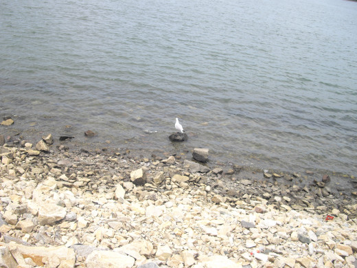 I watched a bird, perched on a rock in the water