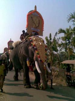 Kerala's Elegant Elephant Enclaves