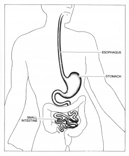 Acid Reflux starts in the stomach and work its way up the esophagus.