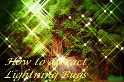 How to Attract Lightning Bugs