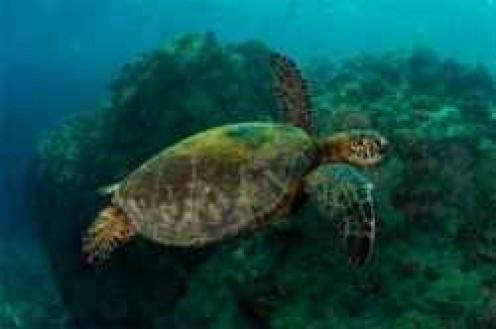 Abundant Sea Life