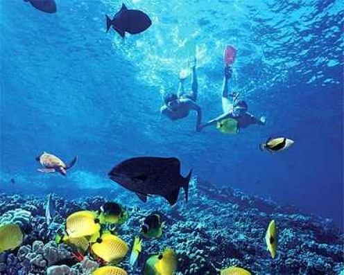 Colorful Fish to Experience when Snorkeling