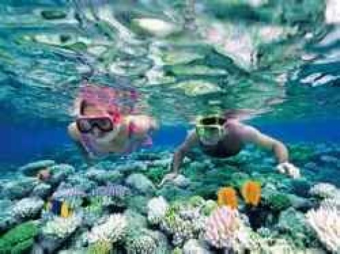 Snorkeling Over a Coral Reef