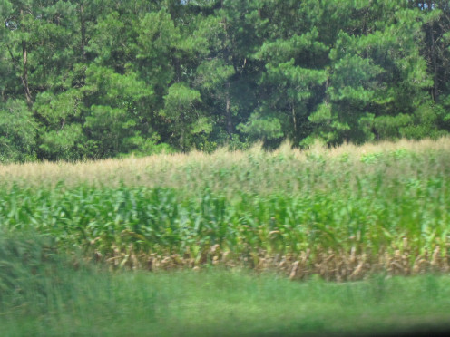 On Saturday, we headed to North Carolina for a fish fry. Along the road we passed numerous corn fields which brought back memories. While some family members enjoyed a water park.