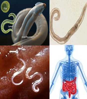 Types of Stomach Worms