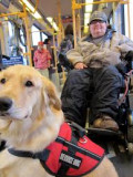 Types of Service/Assistance Animals
