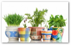 Perk Up The Indoors With Easy To Grow Herb Plants