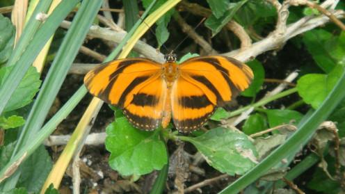Butterfly at Reiman Gardens