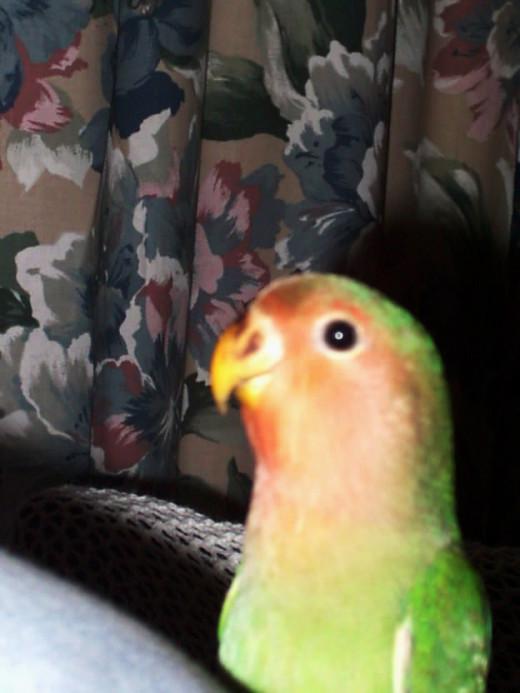 Even the bird is Hypnotized