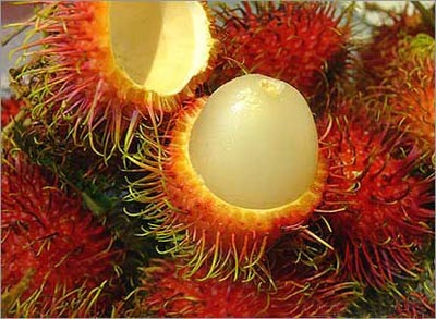 Rambutan fruit (nephelium lappaceum)