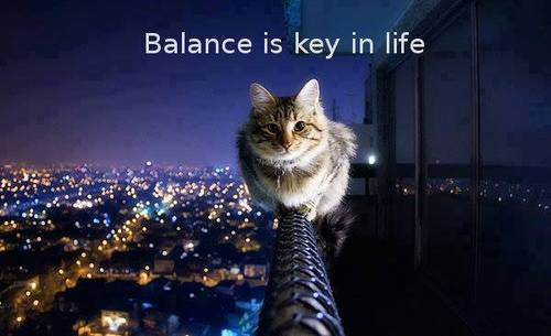 cat, cute, animal, Balance, key in life from Russo Sarah  flickr.com