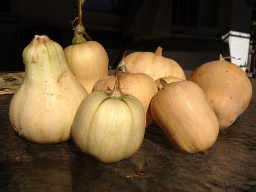 You can use Butternut pumpkins such as these or it is equally nice with Jap or Queensland Blue.  Use whatever you have. The recipes will accommodate all types.