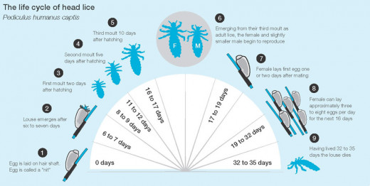 Inturrupting the life cycle of lice is the key to controlling infestations.