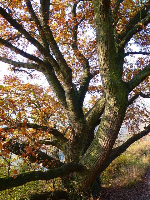 Dagda finds Celeste below the great Oak tree
