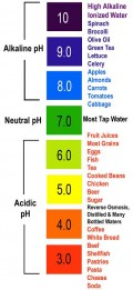 The Acidity and the Alkalinity of Foods