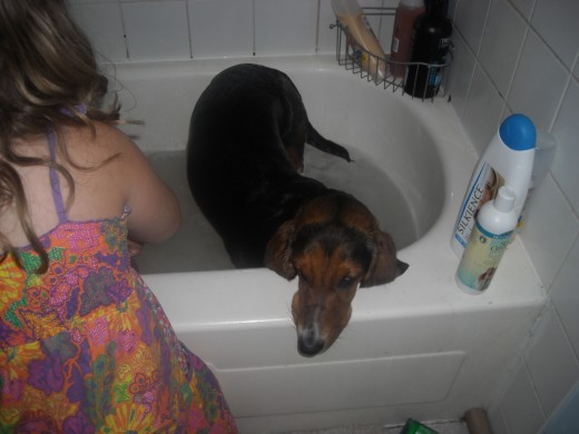 Rosie the Basset Hound doesn't really like the bath either.